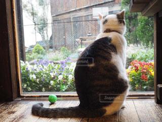 猫,花,動物,木,窓,草,ペット,ボール,イベント,ネコ,猫の日,222,2月22日