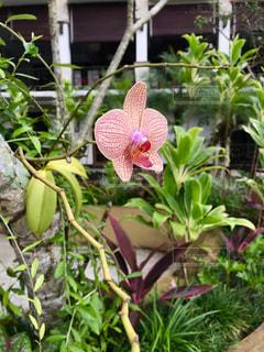 花,南国,綺麗,散歩,日光,草,爽やか,元気,旅行,旅,可愛い,ぶらり
