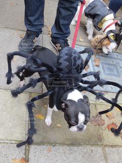 ハロウィンに出会った仮装している犬の写真・画像素材[2499523]