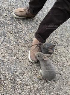 革靴に集まって来たうさぎの写真・画像素材[2702720]