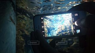 スマホの中の水族館の写真・画像素材[2283296]