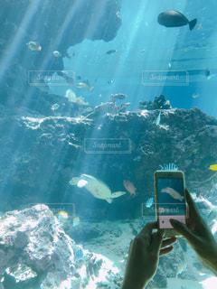 水の中を魚の写真・画像素材[2306763]