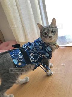 猫の写真・画像素材[2255976]
