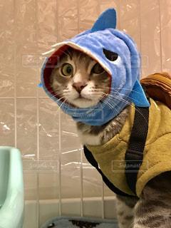 猫の写真・画像素材[2256608]