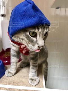 猫の写真・画像素材[2257158]