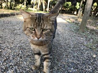 土の中に立っている猫の写真・画像素材[2261416]