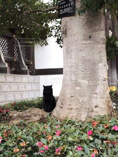 猫,動物,かわいい,散歩,境内