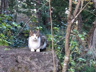 猫,かわいい,散歩,生き物,雑種,境内,人懐こい