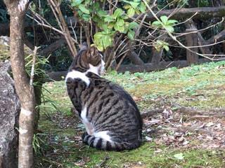 猫,動物,かわいい,散歩,境内,人懐こい