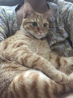 ベッドに横たわる猫の写真・画像素材[2279952]