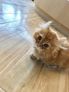 木製の床の上に座っている猫の写真・画像素材[2279968]