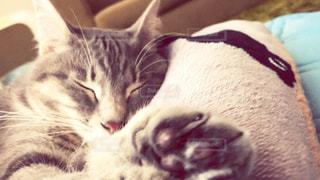猫のクローズアップの写真・画像素材[2280252]