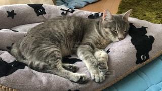 ベッドに横たわる猫の写真・画像素材[2280260]