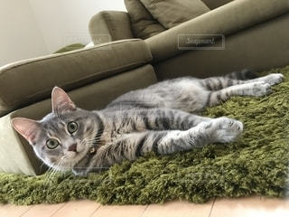 ソファに横たわる猫の写真・画像素材[2280283]
