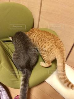 カメラを見ている猫の写真・画像素材[2280304]