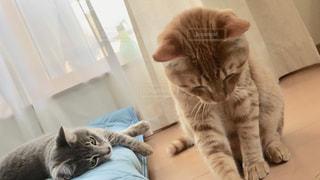横になってカメラを見ている猫の写真・画像素材[2280361]