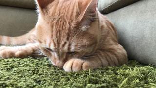 毛布の上に横たわる猫の写真・画像素材[2280362]