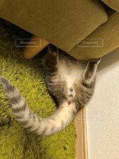 ベッドに横たわる猫の写真・画像素材[2280366]