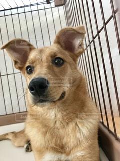 フェンスの前に座っている犬の写真・画像素材[2280369]