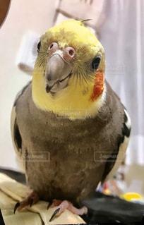 鳥のクローズアップの写真・画像素材[2281099]