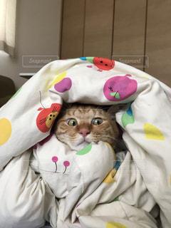 ベッドの上にぬいぐるみの山の上に座っている猫の写真・画像素材[2285993]