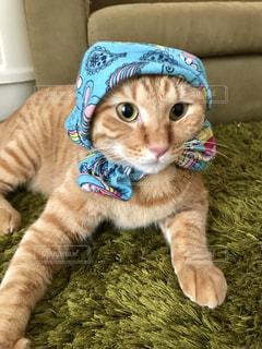 ソファに横たわる猫の写真・画像素材[2286018]