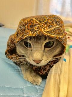 帽子をかぶった猫の写真・画像素材[2287454]