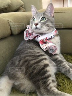 ソファに横たわる猫の写真・画像素材[2291562]