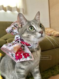 襟付きのシャツを着た猫の写真・画像素材[2291566]