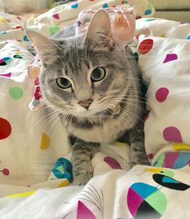 ぬいぐるみの上に座っている猫の写真・画像素材[2291568]