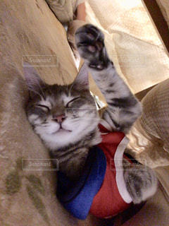 ベッドに横たわる猫の写真・画像素材[2291661]