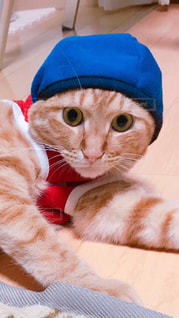 ベッドに横たわるオレンジと白の猫の写真・画像素材[2291678]