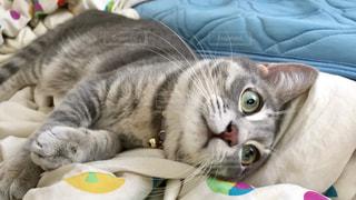 ベッドに横たわる猫の写真・画像素材[2291696]