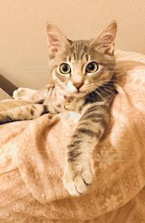 ベッドに横たわる猫の写真・画像素材[2291714]