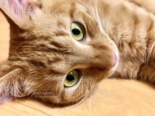 猫のクローズアップの写真・画像素材[2292099]