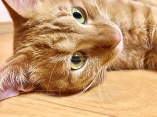 猫のクローズアップの写真・画像素材[2292404]