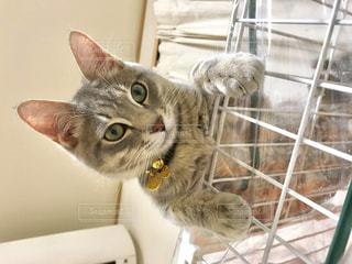 檻の上に座っている猫の写真・画像素材[2292549]