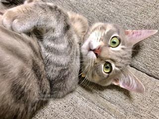 猫のクローズアップの写真・画像素材[2292551]