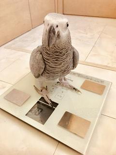 オウムの上に座っている鳥の写真・画像素材[2333901]