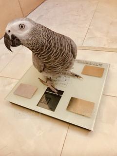 オウムの上に座っている小さな白い鳥の写真・画像素材[2333907]