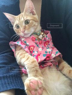 毛布の上に座っている猫の写真・画像素材[2342442]