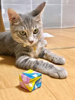 テーブルの上に座っている猫の写真・画像素材[2343307]