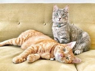 ベッドに横たわっている猫の写真・画像素材[2794211]