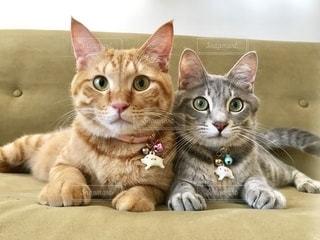お互いの上に横たわっている猫の写真・画像素材[2794221]