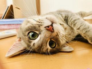 かわいい愛猫の写真・画像素材[2946636]