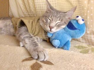 猫,動物,屋内,かわいい,ペット,子猫,人物,キティ,ネコ,ネコ科の動物
