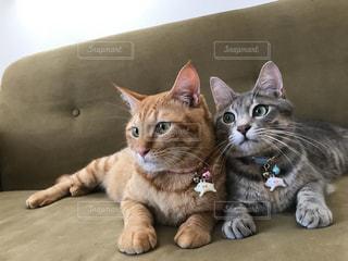 猫,動物,屋内,かわいい,景色,寝転ぶ,ペット,子猫,人物,座る,キティ,ネコ,ネコ科の動物