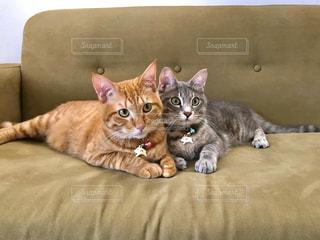 猫,動物,屋内,景色,寝転ぶ,仲良し,ペット,人物,ソファ,キティ,座席,ネコ,ネコ科の動物