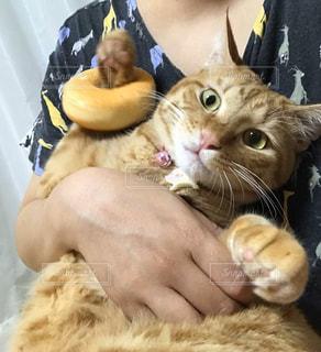 猫,動物,ペット,子猫,人物,人,ドーナツ,ネコ,スクイーズ