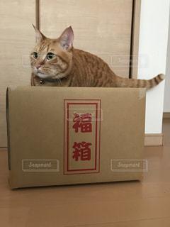 箱の中の猫の写真・画像素材[2961310]